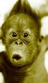 Strange Monkey Face Picture