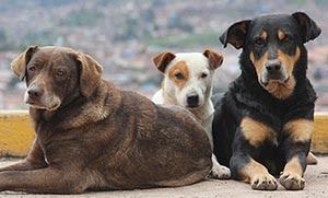 Πώς μπορείτε να αντιμετωπίσετε τη δηλητηρίαση των ζώων