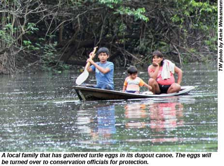 A local family gathered turtle eggs in its dugout canoe to turn over to conservation officials for protection.