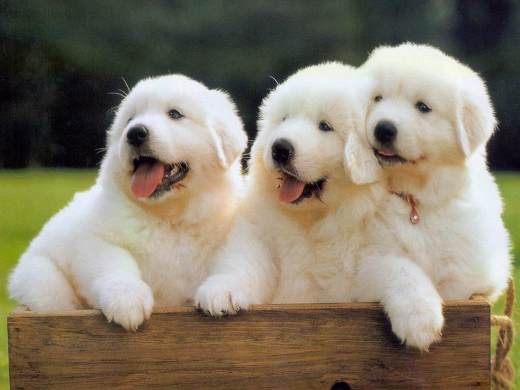 Gambar Wallpaper Anjing Lucu
