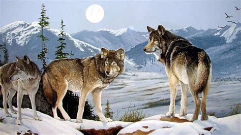 wolves peaks winter moon desktop pc  mac