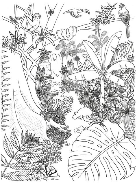 rainforest animals  plants coloring page rainforest