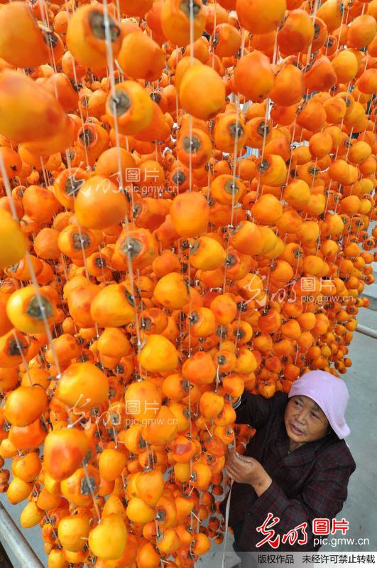 On October 15, 2012, shandong zouping county in the qingyang town of the fruit peel persimmon hanging up the sun dried persimmon. Autumn in October, shandong binzhou zouping county in the south mountain fruit grower to ten thousand mu of persimmon orchard persimmon picking down, with traditional to skin, hanging, air basks in frost of plating and manual method of producing dried persimmon, makes the dried persimmon exquisite and soft, tasty GanShuang, become mountain fruit grower of increasing channel; At the same time, every air basks in yellow orange orange sun dried persimmon persimmon frame, give a mountain village autumn added gorgeous color. The graph is shandong zouping county in the qingyang town of the fruit peel persimmon hanging up the sun dried persimmon.