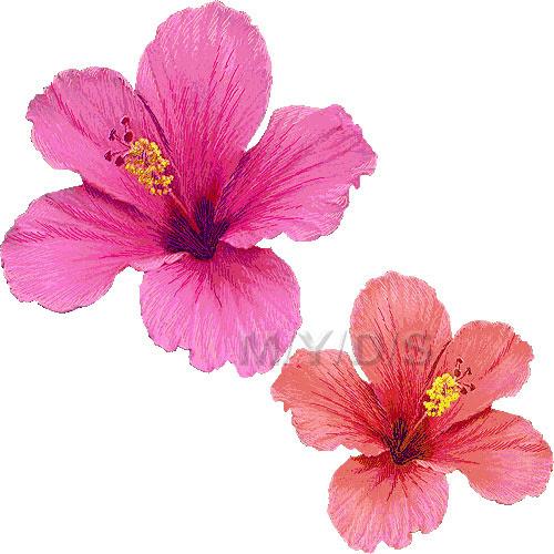 ハイビスカスの花のイラスト条件付フリー素材集