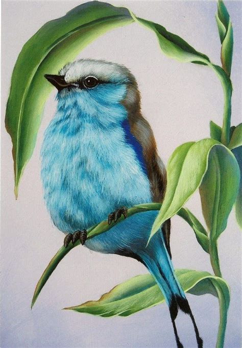 ideas  colored pencil drawings  pinterest