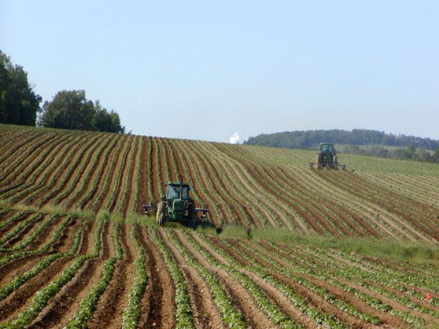 File:Tractors in Potato Field.jpg