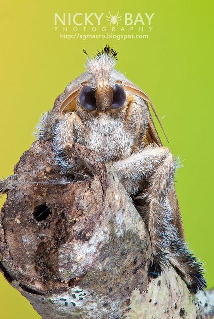 Moth - DSC_6569