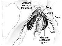 Estructura anatómica de la vagina