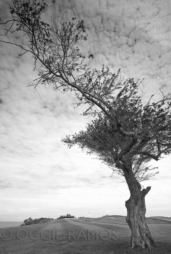 Thunderbird Resort - Lone Tree in Mono