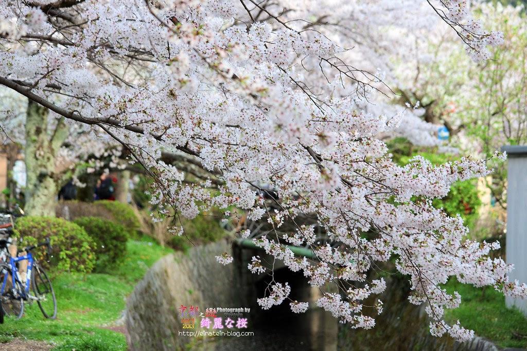 2013-04-04-15h32m21IMG_1868