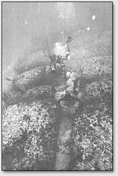 Аквалангисты обследуют подводные мегалитические руины возле острова Бимини.
