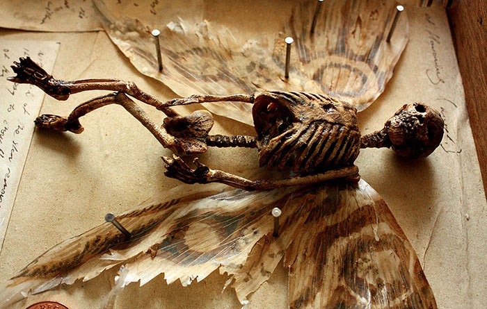 skulls-skeletons-thomas-theodore-merlin-home-london42