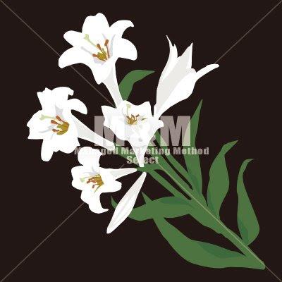 イラスト素材 Flower 百合の花のイラスト Mm Collection