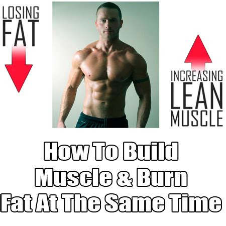ep     build muscle lose fat