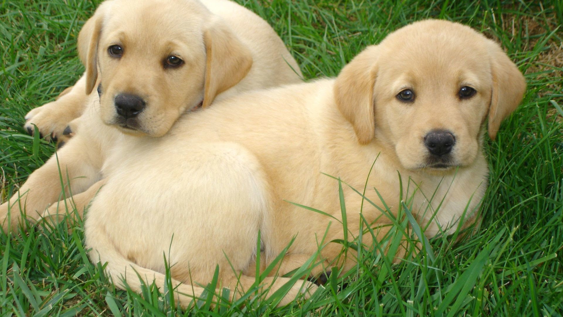 Puppy Wallpaper and Screensavers (53+ images)