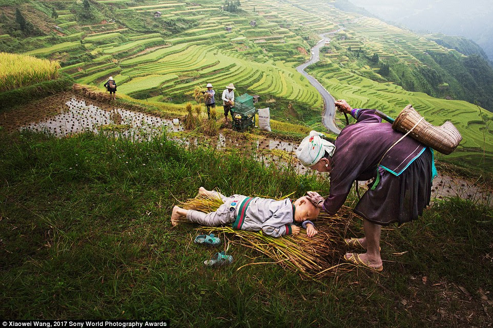 In Guizhou, China, this little boy's parents are busy harvesting as his 90-year-old grandmother takes a quick break to enjoy a tender moment with him