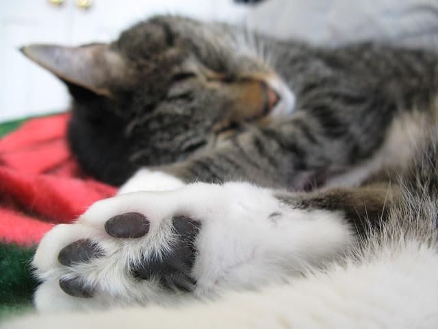 MF Sleeping