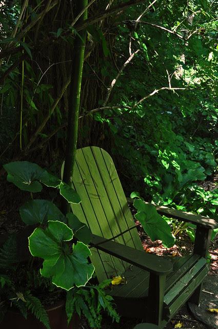 Asian Woods (2)