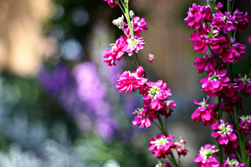 sugary sweet girlie flowers