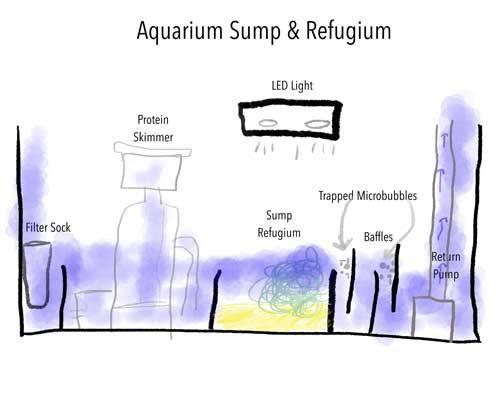 700 Koleksi Gambar Design Aquarium Sump Gratis Terbaik Unduh Gratis