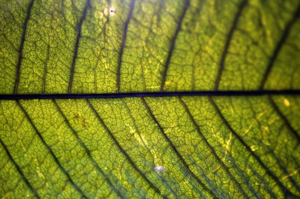 Canada Develops Micro Photosynthetic Power Cells