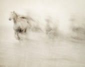 Nature photography, Abstract Horse Photograph, White Horses Running, Haunting, Halloween, Ethereal, Camargue - Ghosts Among Us - EyePoetryPhotography