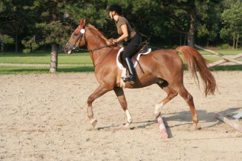 Jak jeździć konno?