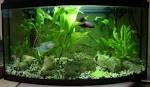 Fish Vault: Good tips for to decorate your aqurium: best idea to ...