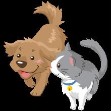 診療方針 さわずみ動物病院 鳥取県倉吉市の動物病院犬猫診療