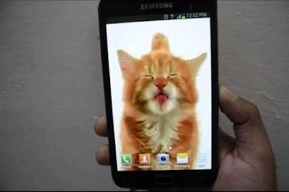 Cat Licking Screen Live Wallpaper Iphone