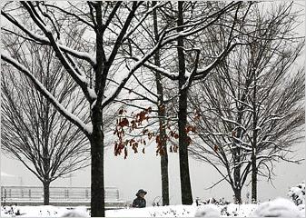 Snowstorm Blankets New York