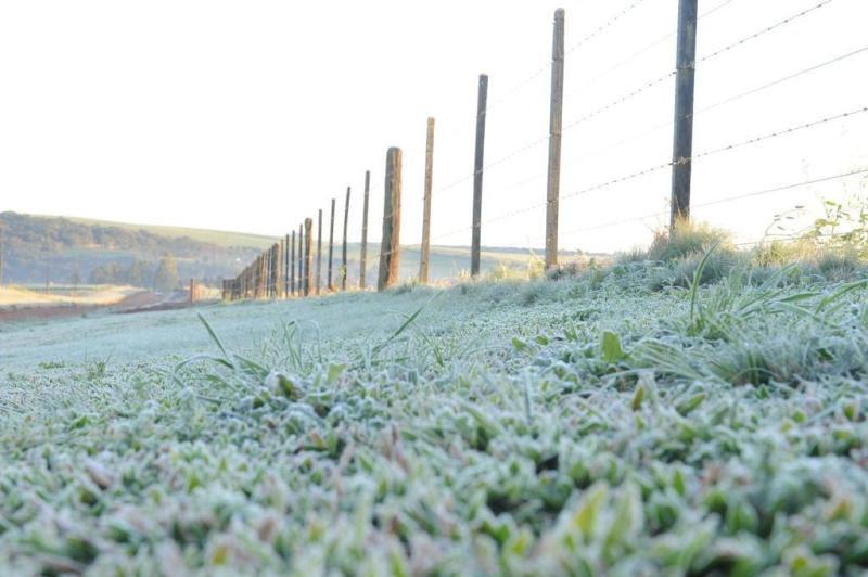 Em Passo Fundo/RS, frio deixou os campos cobertos de geada, com temperaturas na casa de 0ºC:imagem 7