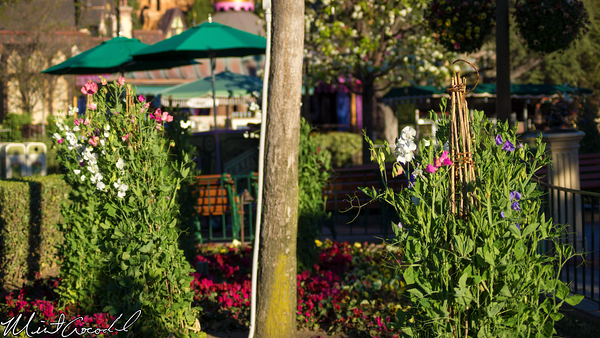 Disneyland Resort, Disneyland, Main Street U.S.A., Hub, Flower