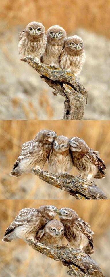 owly-molly-6