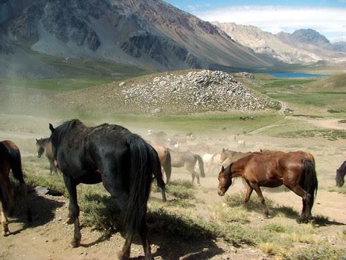 Malargüe - Arreo de caballos