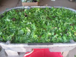 A washtub of freshly cleaned spring greens mix