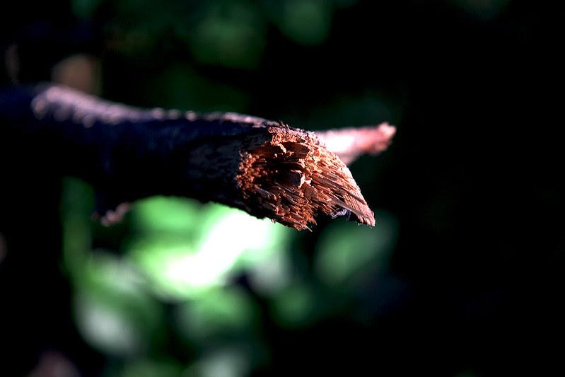 broken branch in sunlight