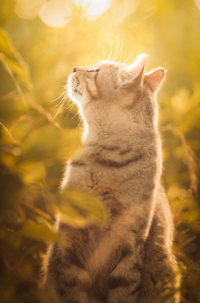 These are some of the most beautiful cat photos I've ever ...