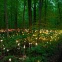 Impresionantes Bruce Munro Instalaciones LED iluminan los jardines de Longwood (15) Cortesía de Bruce Munro