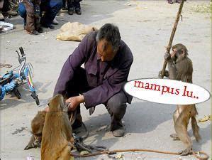 angker kumpulan monyet lucu