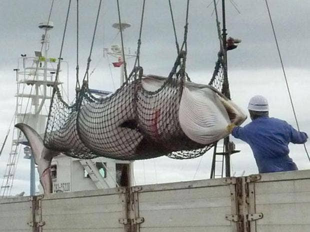 23-Whaling-AP.jpg