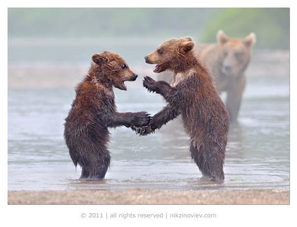 Υπέροχες φωτογραφίες φιλίας ζώων που θα σας φτιάξουν τη διάθεση (6)