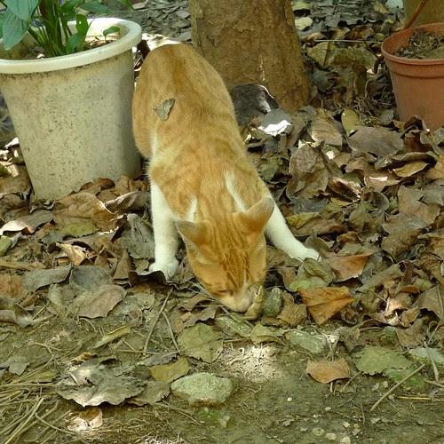小黃貓與蜥蜴之戰-4