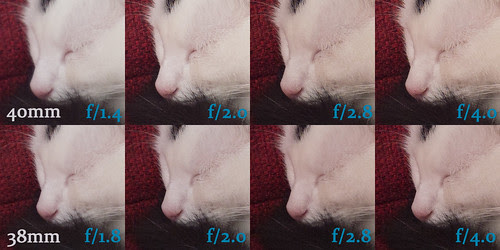 PEN F lens tests: 40mm vs. 38mm  (cat)