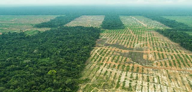 qmph-blgo--OMS-estrategia-medicinas-tradicionales--deforestacion