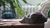 Consejos para preparar el hogar ante la llegada de una mascota