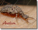 Learn about the Antlion photo book