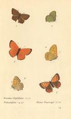 papillons d 11