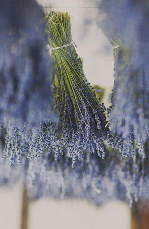 Lavender. Just the scent brings me back to the South of France. It is found in nearly every garden, and dried lavender adorns almost every home.