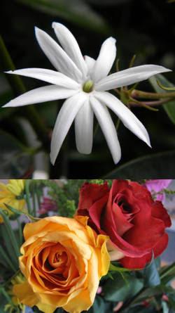 ejemplos de capullos con aroma